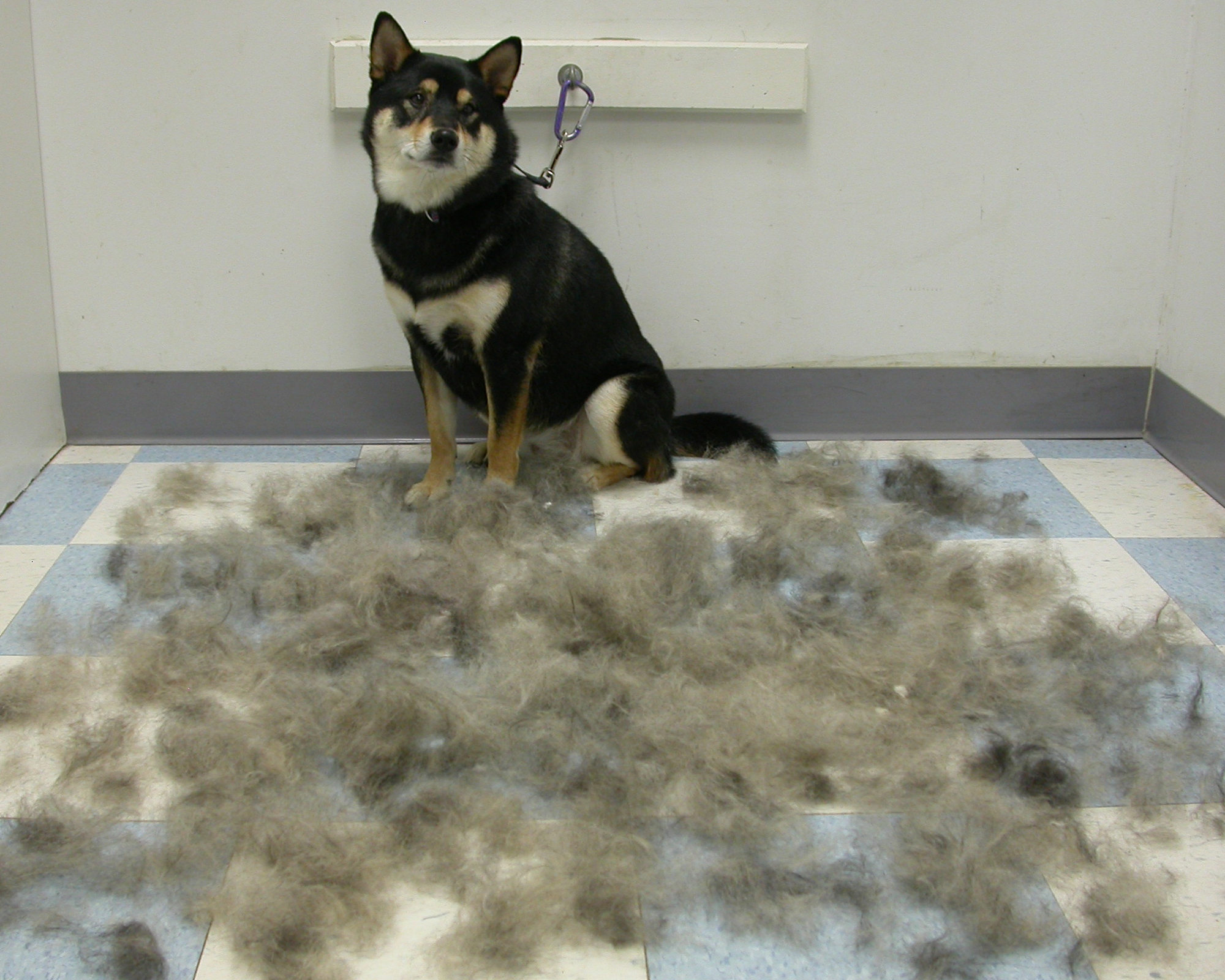 Cat Is Shedding A Lot Of Hair